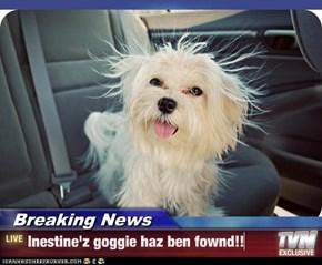 Breaking News - Inestine'z goggie haz ben fownd!!