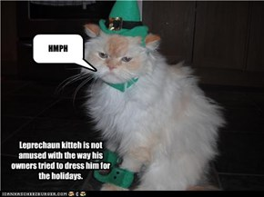 Leprechaun kitteh is not amused with the way his owners tried to dress him for the holidays.