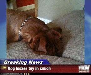 Breaking Newz - Dog loozes toy in couch