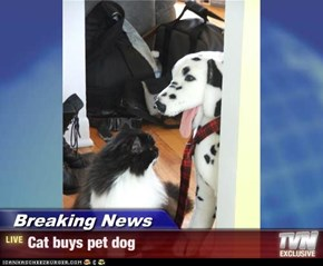 Breaking News - Cat buys pet dog