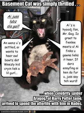 Even Basement Cat gets star-struck