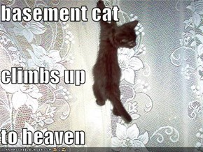 basement cat climbs up to heaven