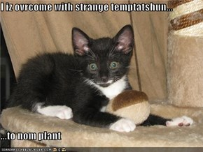 I iz ovrcome with strange temptatshun...  ...to nom plant