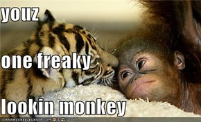 youz one freaky lookin monkey