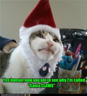 "Yes human, now you get to see why I'm called ""Santa CLAWS"" . . ."