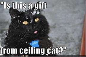 """Is this a gift  from ceiling cat?"""