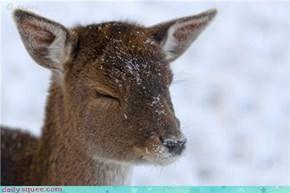 Twinkling Baby Deer