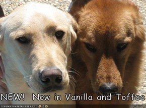 NEW!  Now in Vanilla and Toffee
