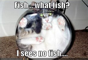 Fish... what fish?  I sees no fish....