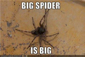 BIG SPIDER  IS BIG
