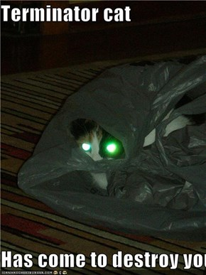 Terminator cat  Has come to destroy you
