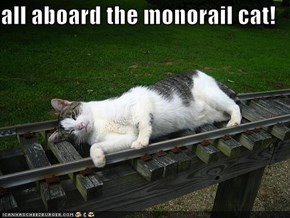 all aboard the monorail cat!