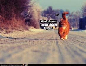 -->   Kitteh observs proper driving signals.