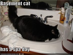 Basement cat  has a spa day