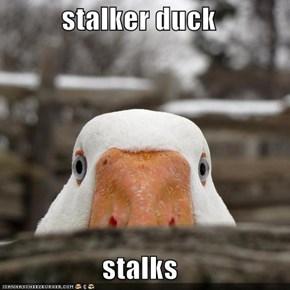 stalker duck  stalks