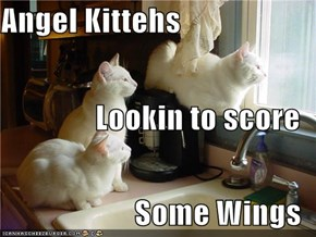 Angel Kittehs Lookin to score Some Wings