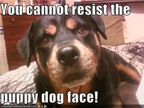 You cannot resist the  puppy dog face!