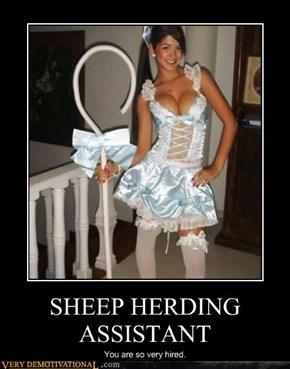 SHEEP HERDING ASSISTANT