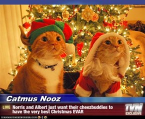 Catmus Nooz - Norris and Albert just want their cheezbuddies to have the very best Christmas EVAR