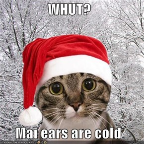 WHUT?  Mai ears are cold