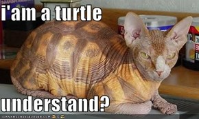 i'am a turtle  understand?