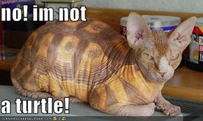 no! im not   a turtle!