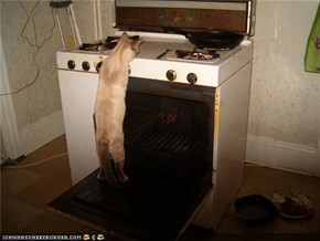 cat in stove by him self