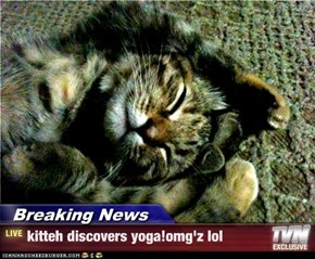 Breaking News - kitteh discovers yoga!omg'z lol