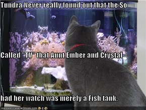 "Tundra Never really found out that the So Called ""TV"" that Aunt Ember and Crystal had her watch was merely a Fish tank."