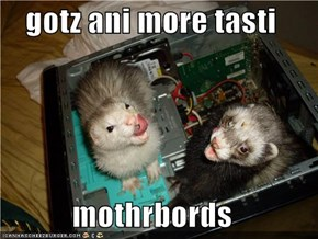 gotz ani more tasti  mothrbords