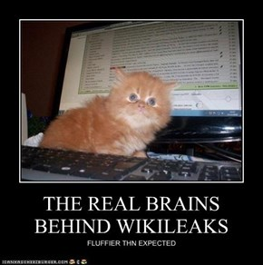 THE REAL BRAINS BEHIND WIKILEAKS
