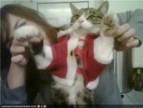 Christmas kitteh