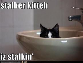 stalker kitteh  iz stalkin'