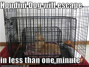 Houdini Dog will escape  in less than one minute