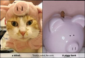 a kitteh Totally Looks Like A piggy bank