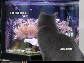 i no find nemo.......