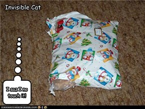 Invisible Cat