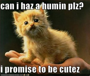 can i haz a humin plz?   i promise to be cutez