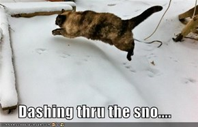 Dashing thru the sno....