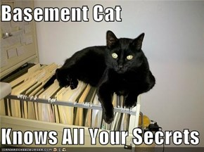 Basement Cat  Knows All Your Secrets
