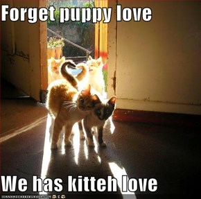 Forget puppy love  We has kitteh love