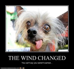 THE WIND CHANGED