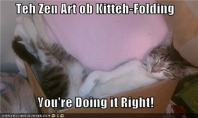 Teh Zen Art ob Kitteh-Folding  You're Doing it Right!