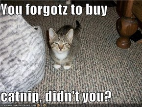 You forgotz to buy   catnip, didn't you?