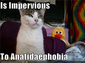 Is Impervious  To Anatidaephobia