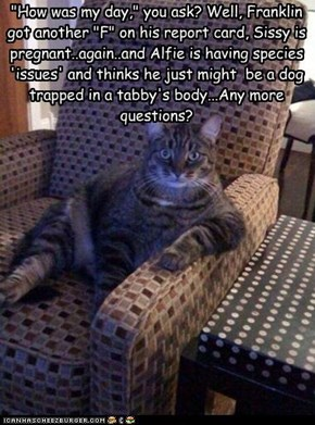 """How was my day,"" you ask? Well, Franklin got another ""F"" on his report card, Sissy is pregnant..again..and Alfie is having species 'issues' and thinks he just might  be a dog trapped in a tabby's body...Any more questions?"