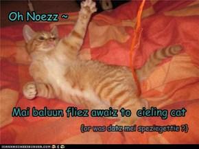 Oh Noezz ~