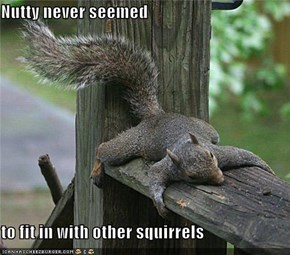 Nutty never seemed  to fit in with other squirrels