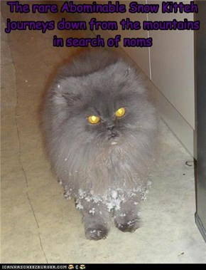 Abominable Snow Kitteh