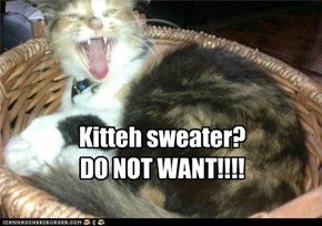 Kitteh sweater? DO NOT WANT!!!!